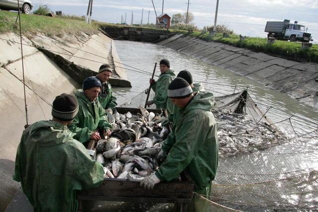 рыболовный промысел как ип