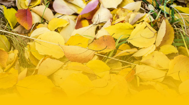 Ноябрь вступает в силу. Какие законы, которые вступят в силу в последний месяц осени?