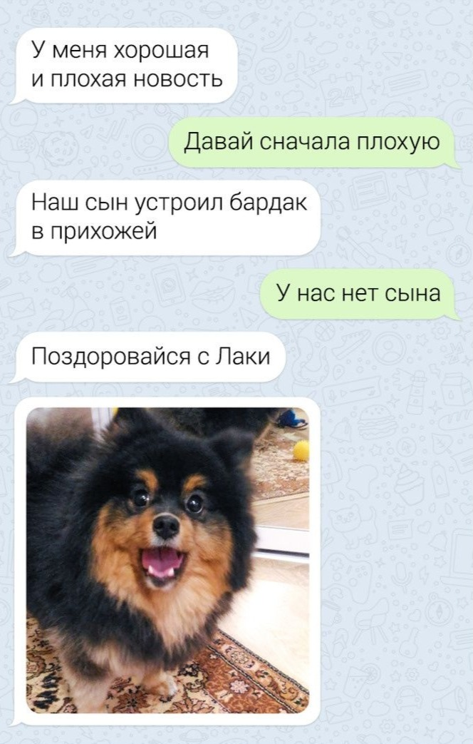 собака