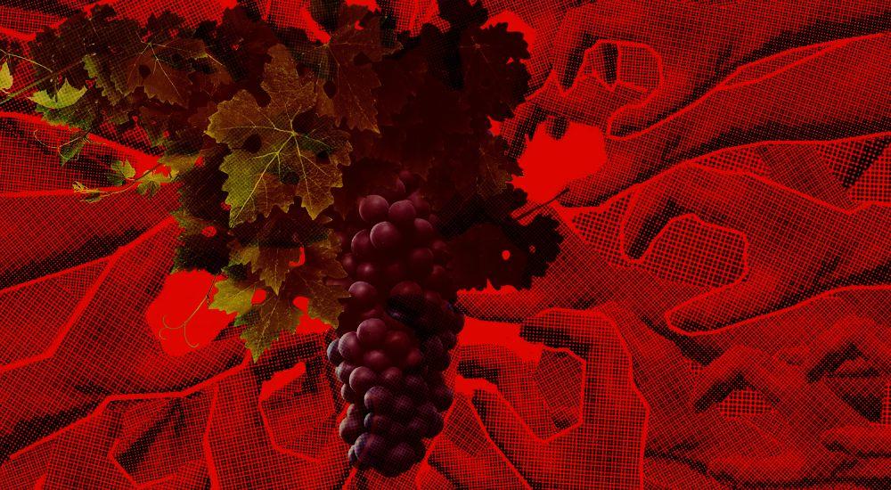 Новый налог: виноград в России попал под акциз