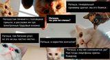 «Наташа, вставай!». Бухгалтерский вариант знаменитых котов год спустя